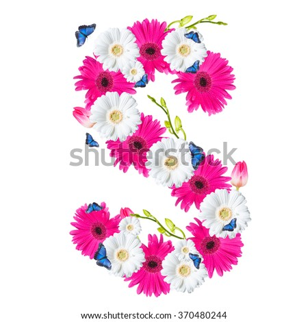 Alphabet S, flower isolated on white background. Gerber, tulips and butterfly  - stock photo