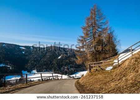 Alpin landscape with a red pine tree and street