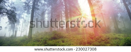 Alpine autumn panorama, scenic sunrise in the beautiful Carpathian forest after rain shining colors and the freshness and coolness of the morning - will clear the new day and good weather after  storm - stock photo