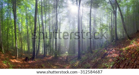 Alpine autumn panorama, scenic sunrise in the beautiful Carpathian forest after rain shining colors and the freshness  coolness of the morning - will clear the new day and good weather after the storm
