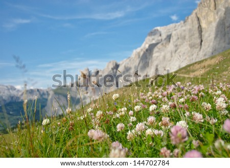 Alpine flowers surrounded by mountains under blue sky with clovers close-up