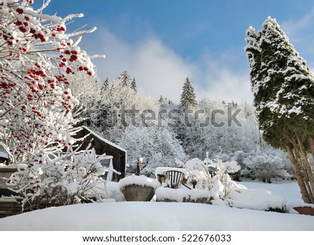 alpine garden covered by snow in winter
