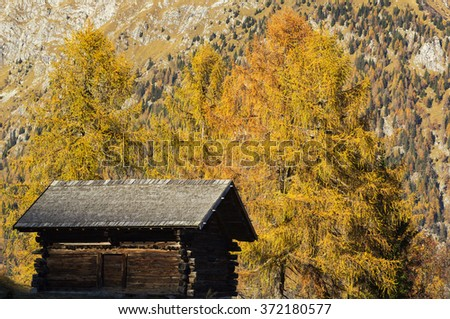 Alpine hut with larch trees in autumn, Trentino, Italy