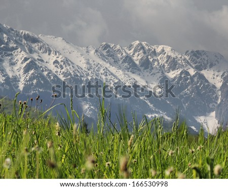 Alpine landscape with green meadow and snowed white mountains behind - stock photo
