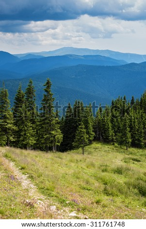 Alpine landscape with road and pine forest - stock photo