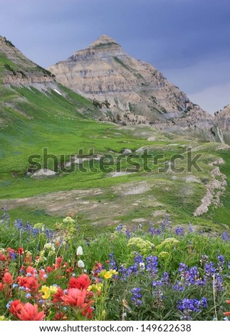 Alpine landscape with wildflowers in Utah's Wasatch Mountains, Utah, USA. - stock photo