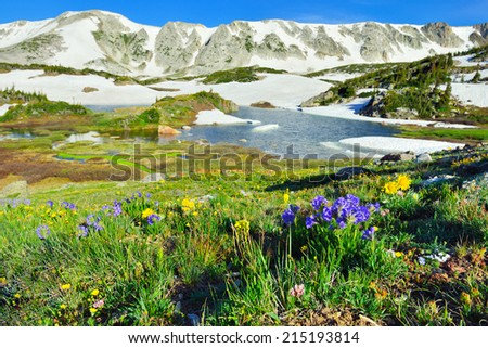 Alpine meadow and wild flowers in Snowy Range Mountains in Medicine Bow, Wyoming in summer - stock photo