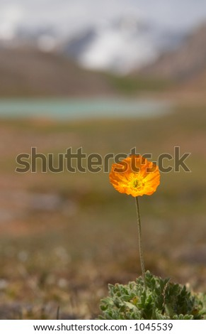 Alpine  meadow in the morning 3 - stock photo