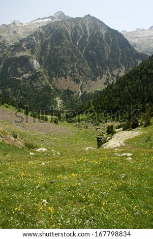 alpine meadow in vall de lliterola in springtime - stock photo