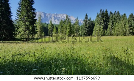 alpine meadow & wetterstein