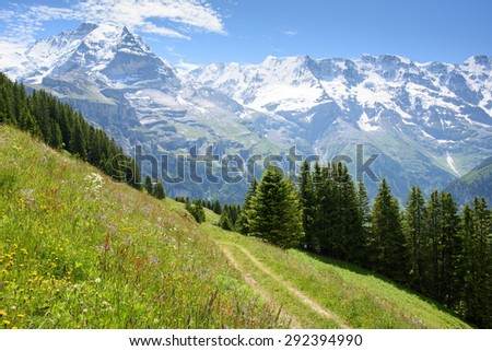 Alpine meadow with wild flowers and a walking track above Blumental in the Swiss Alps near Interlaken, showing the Jungfrau in the distance over the Lauterbrunnen valley. - stock photo