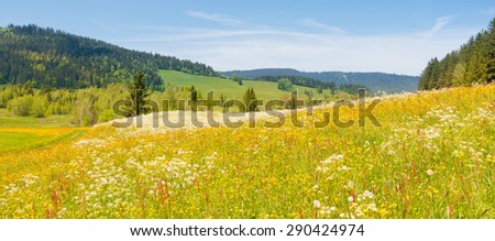 Alpine meadow with wild flowers on a bright summer  joyful day. Filter soft light - stock photo