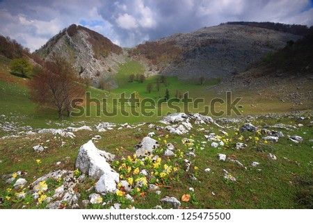 Alpine meadow with yellow flowers