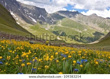 alpine meadows - stock photo