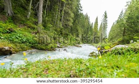 Alpine mountain creek in evergreen pine forest - stock photo