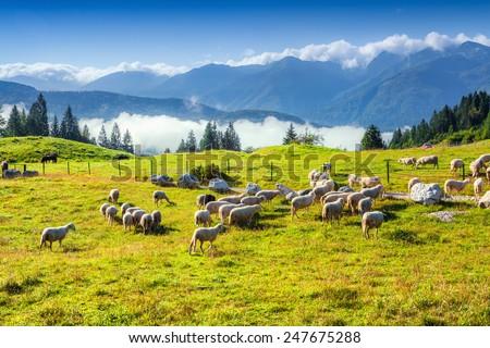 Alpine pastures in the Slovenia, Julian Alps. Triglav National Park. - stock photo