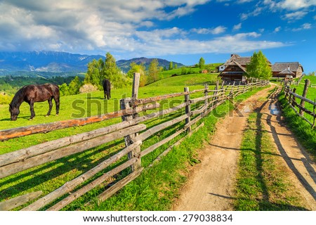 Alpine rural landscape with grazing horses on the green fields,Bran,Transylvania,Romania,Europe - stock photo