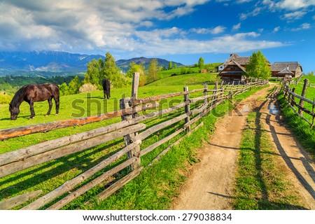 Alpine rural landscape with grazing horses on the green fields,Bran,Transylvania,Romania,Europe - stock photo