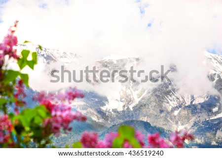 Alpine scenery. Blurry Lilac flowers shrubs at foreground and peaks of Alps mountains covered with snow and clouds in Provence-Alpes-Cote d'Azur region of France. Selective focus on the mountains.
