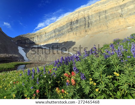 Alpine wildflowers in the Utah mountains, USA. - stock photo
