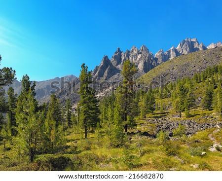 Alpine woodlands. Eastern Sayan. TUNKA ridge. Republic of Buryatia - stock photo