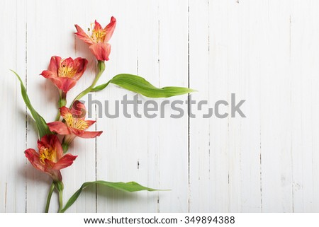 Alstroemeria flowers on white wooden backgro - stock photo