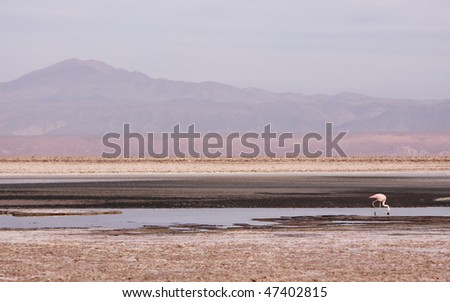 Altiplano Lagoon - stock photo