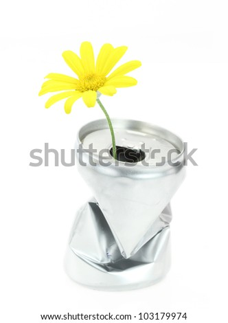 Aluminum can with growing daisy flower