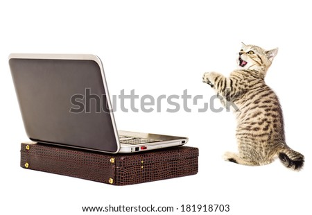 Amazed kitten looking at a laptop, isolated on white background.