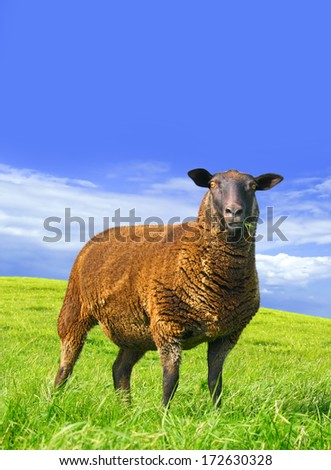 Amazed sheep. Digital image processing from photo. - stock photo