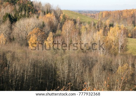 Amazing aerial view from watchtower over the tree forest in autumn, Korneti, Latvia
