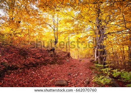 amazing alley with colorful trees   in sunny autumn forest. natural background