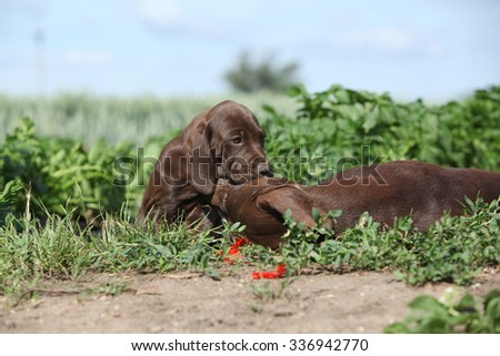 Amazing bitch playing with its puppies in nature - stock photo