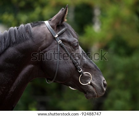 Amazing black stallion on black background. Low key portrait