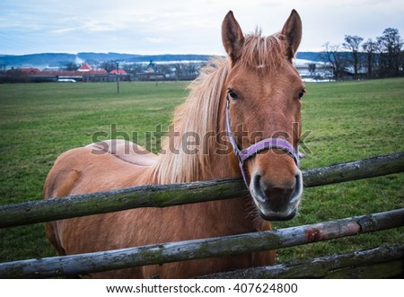 Amazing Brown Horse  - stock photo