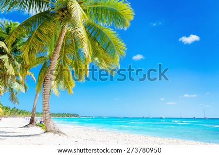 Amazing Caribbean beach with exotic palm tree and blue sky - stock photo