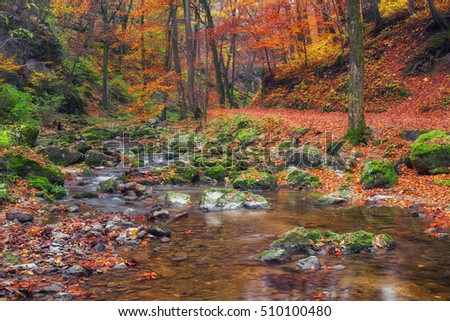 Amazing colorful autumn forest in Bakony mountains in Hungary