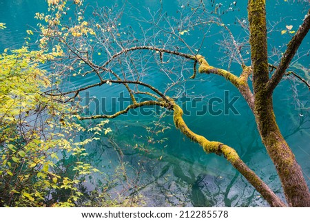 Amazing colors of mossy tree and deep lake at Jiuzhaigou Valley National Park, China - stock photo