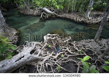 Amazing crystal clear emerald canal with mangrove forest at Tapom Krabi Thailand - stock photo