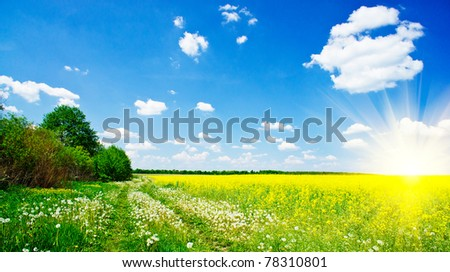 Amazing dandelions, rapeseeds and blue sky with sun. - stock photo