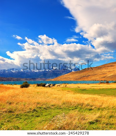 Amazing day on the lake Laguna Azul. Herd of mustangs grazing in the meadow. On the horizon, towering cliffs Torres del Paine - stock photo