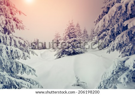 Amazing evening winter landscape. National Park. Carpathian, Ukraine, Europe. Beauty world. Retro style filter. Instagram toning effect. Happy New Year! - stock photo