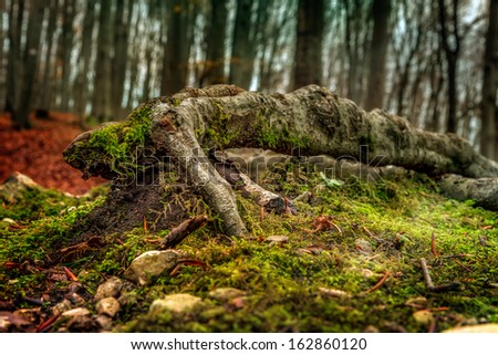Amazing Fall Forrest. Lovely Nature Picture of an European Forest in Bavaria, Germany - stock photo