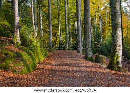 Amazing forest path in the wilderness