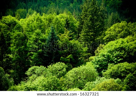 Amazing green, lush forest scene - stock photo
