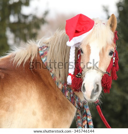 Amazing horse with christmas hat and gifts - stock photo