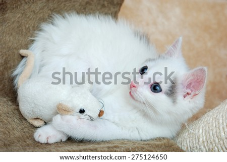 Amazing kitten playing with a plush mouse - stock photo