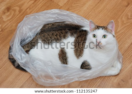 Amazing lady-cat lying in the plastic bag on the floor