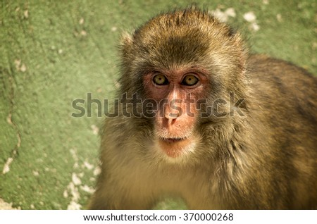 Amazing monkey photo with great details