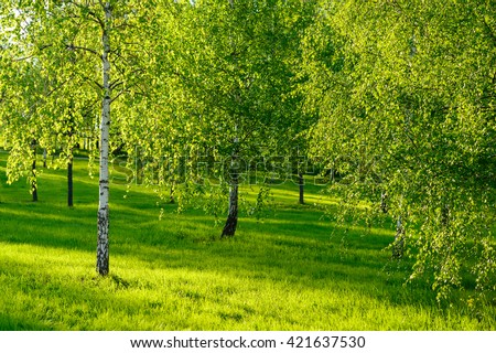 Amazing nature view of green forest and sunlight landscape at a day. Natural summer landscape of fresh birch trees background. Beautiful sunny green nature at the middle of the spring or summer.  - stock photo